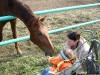 На конезаводе, кормим лошадок